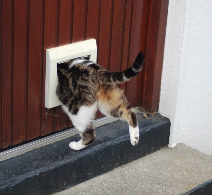 Cat Flap | Cats are funny. | Stephen Hanafin | Flickr