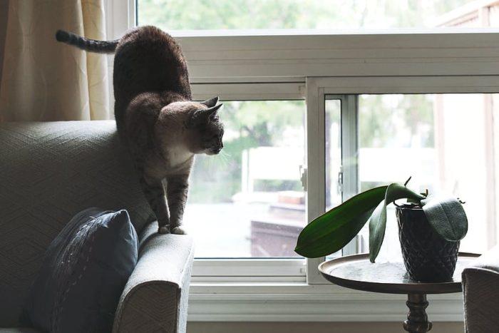 chat, canapé, photo de la fenêtre, animaux, chats, maison, animaux domestiques, des murs, les plantes, la fenêtre, table, un animal, mammifère, animal, national, à l'intérieur, thèmes animaux, chat domestique, journée, meubles, intérieur de la maison, siège, félin, personne, chaise, séance, petit, 4K